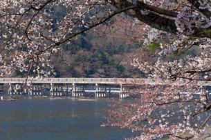 嵐山,渡月橋の写真素材 [FYI03961818]