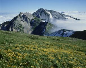 白馬岳より望む杓子岳と鑓ケ岳の写真素材 [FYI03961874]