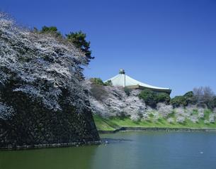北の丸 武道館の桜の写真素材 [FYI03962468]