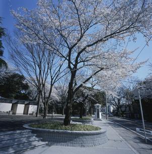 元町公園(山手本通り)の写真素材 [FYI03962477]