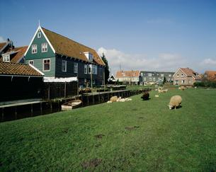 緑の家と羊の写真素材 [FYI03962770]