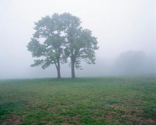 霧の中の樹々 田代高原の写真素材 [FYI03962790]