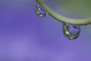 水滴の写真素材 [FYI03966569]