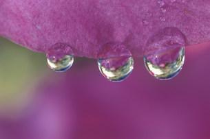 水滴の写真素材 [FYI03966570]