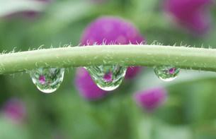 水滴の写真素材 [FYI03966572]