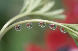 水滴の写真素材 [FYI03966573]