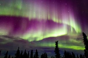 アラスカ フェアバンクスのオーロラの写真素材 [FYI03967415]