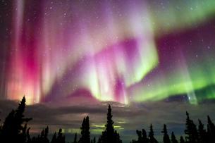 アラスカ フェアバンクスのオーロラの写真素材 [FYI03967435]