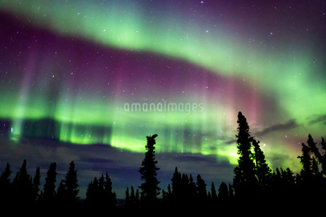アラスカ フェアバンクスのオーロラの写真素材 [FYI03967452]
