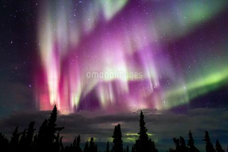 アラスカ フェアバンクスのオーロラの写真素材 [FYI03967469]