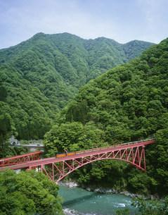 新緑の山彦橋を渡る黒部渓谷鉄道の写真素材 [FYI03969553]