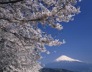 桜と富士山   富士川付近 山梨県の写真素材 [FYI03969784]