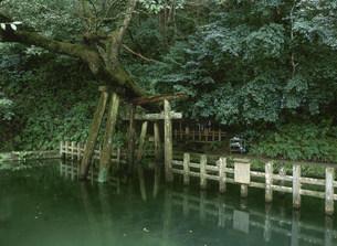 鹿島神宮 御手洗池の写真素材 [FYI03969920]
