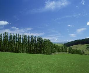 ポプラと牧場  インバーカーギル ニュージーランドの写真素材 [FYI03972629]