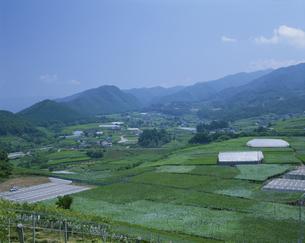 ブドウ畑 勝沼の写真素材 [FYI03972640]