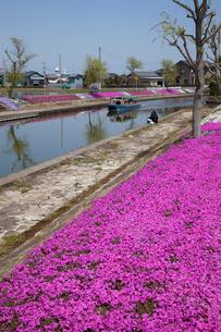 潮来十二橋めぐりの船とシバザクラの花の写真素材 [FYI03972797]