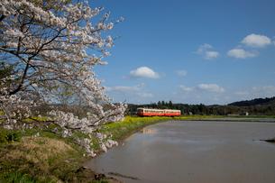 サクラ咲く田園を行く小湊鉄道の写真素材 [FYI03972813]