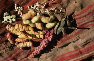 ペルー原産のジャガイモ各種の写真素材 [FYI03973006]