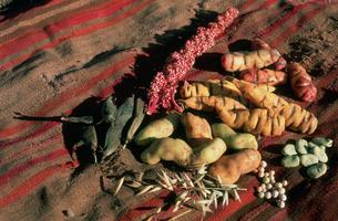 ペルー原産のジャガイモ各種の写真素材 [FYI03973009]