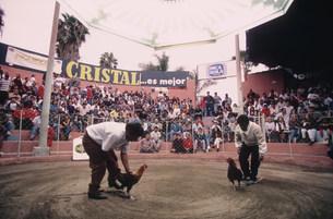 リマ市郊外の闘鶏場の写真素材 [FYI03973042]