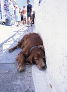 イアの街並み 路上で昼寝をする犬の写真素材 [FYI03973286]