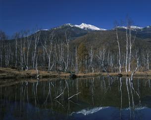 乗鞍岳と白樺林 10月  長野県の写真素材 [FYI03974730]
