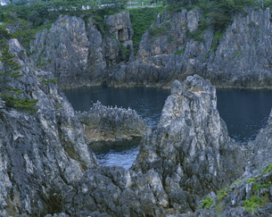 海鳥と岩 尖閣湾の写真素材 [FYI03974793]