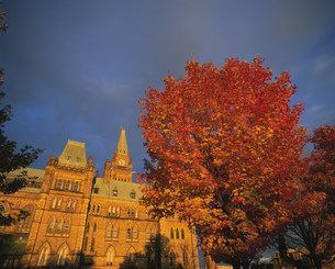 夕日に映える国会議事堂と紅葉の木の写真素材 [FYI03974797]
