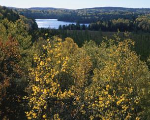 アルゴンキン州立公園の湖と紅葉の写真素材 [FYI03974801]