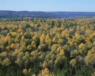 展望台から望むアルゴンキン州立公園の湖と紅葉の写真素材 [FYI03974802]