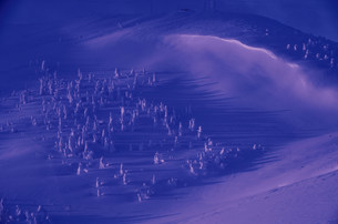 夜明けの地蔵岳の樹氷群の写真素材 [FYI03975441]