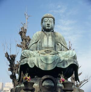 諏訪山吉祥寺大仏の写真素材 [FYI03976069]