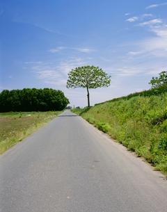 桐のある路の写真素材 [FYI03976083]