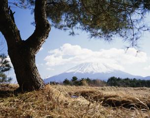 松と富士の写真素材 [FYI03976178]