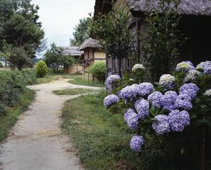 紫陽花の路の写真素材 [FYI03976289]