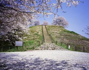 桜の埼玉古墳 丸墓山の写真素材 [FYI03976363]