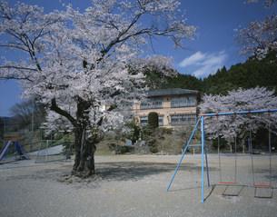 桜咲く山の小学校の写真素材 [FYI03976403]