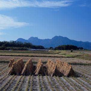妙義連峰と束ねた稲の写真素材 [FYI03976549]