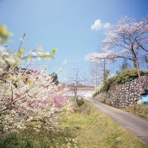 桃と桜の咲く道と廃校になった小学校の写真素材 [FYI03976568]
