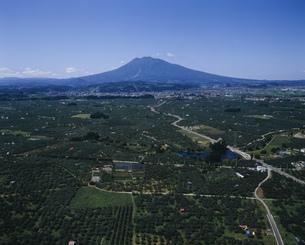 小沢地区のりんご畑の写真素材 [FYI03978006]
