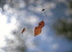 落ち葉とクモの写真素材 [FYI03980625]