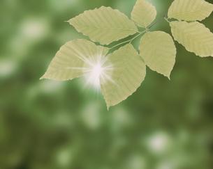 ブナの小枝と光条の写真素材 [FYI03981005]