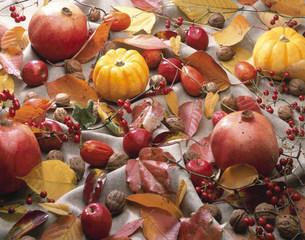 秋の風情の写真素材 [FYI03981024]