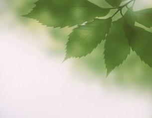 緑の小枝の写真素材 [FYI03981110]