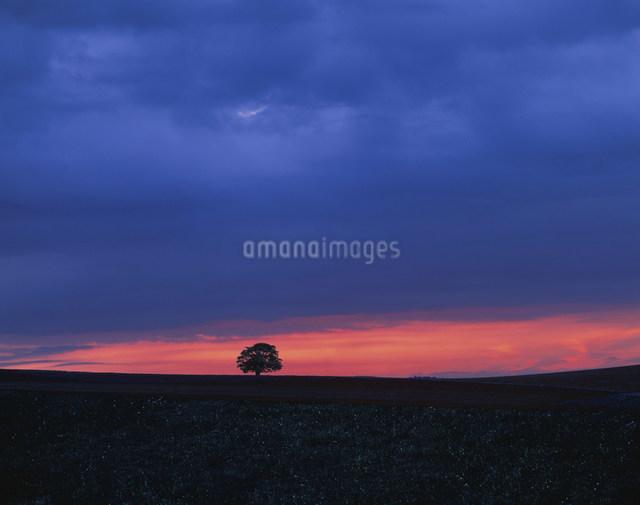 仮想風景夜明けの一本の木の写真素材 [FYI03981180]