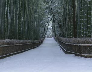 雪の竹林 嵯峨野の写真素材 [FYI03981497]