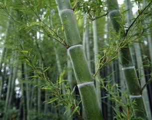 竹の写真素材 [FYI03981561]
