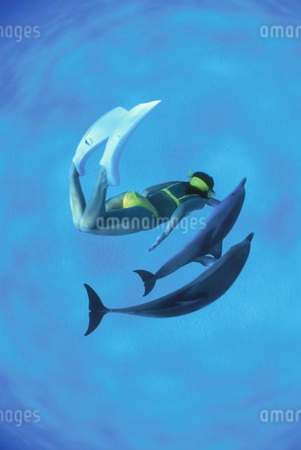 マダライルカと泳ぐダイバーの写真素材 [FYI03981591]