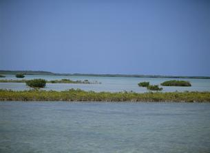 フロリダキーのマングローブの写真素材 [FYI03981740]