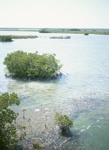 フロリダキーのマングローブの写真素材 [FYI03981743]